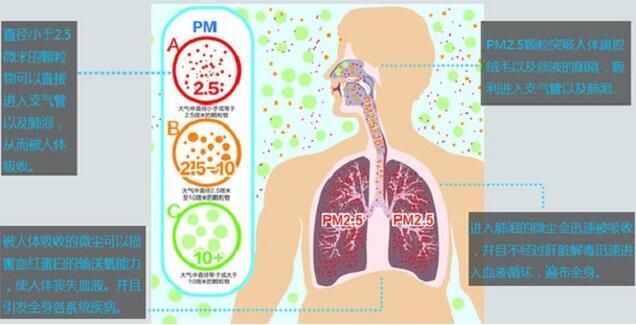 儿童与成人的肺结构